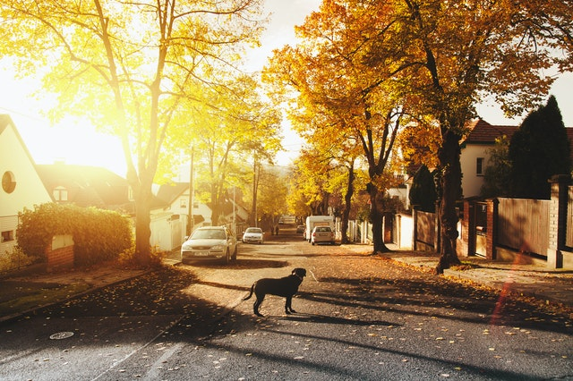 Things to Consider Before Moving from the City to the Suburbs
